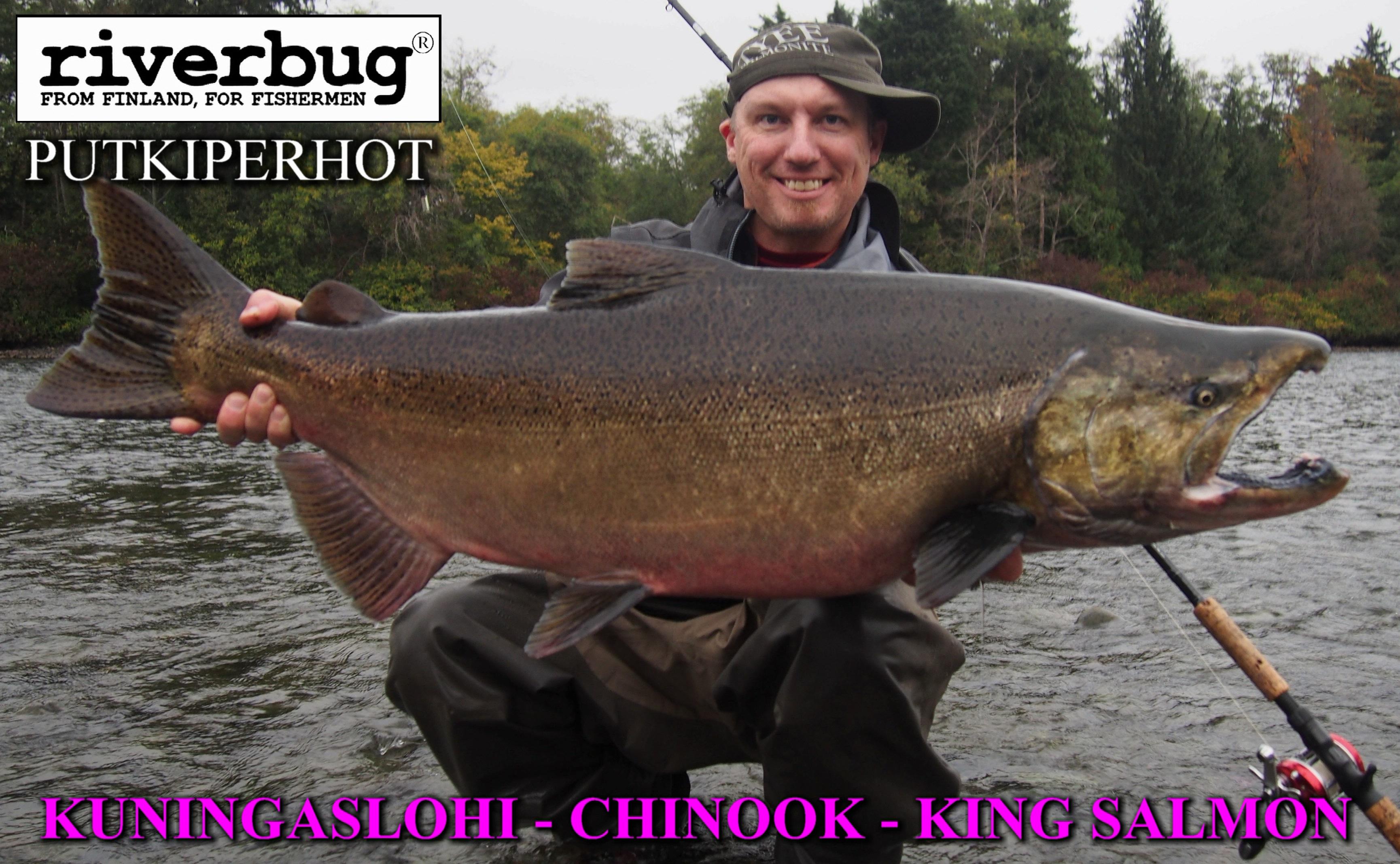 Spinfly King Salmon ( KUNINGASLOHI ) with RiverBug singlehook fly. #kingsalmon #kuningaslohi #lohi #canada #putkiperhot #streamer #kalastus #fishing #kala #perhokauppa #riverbug