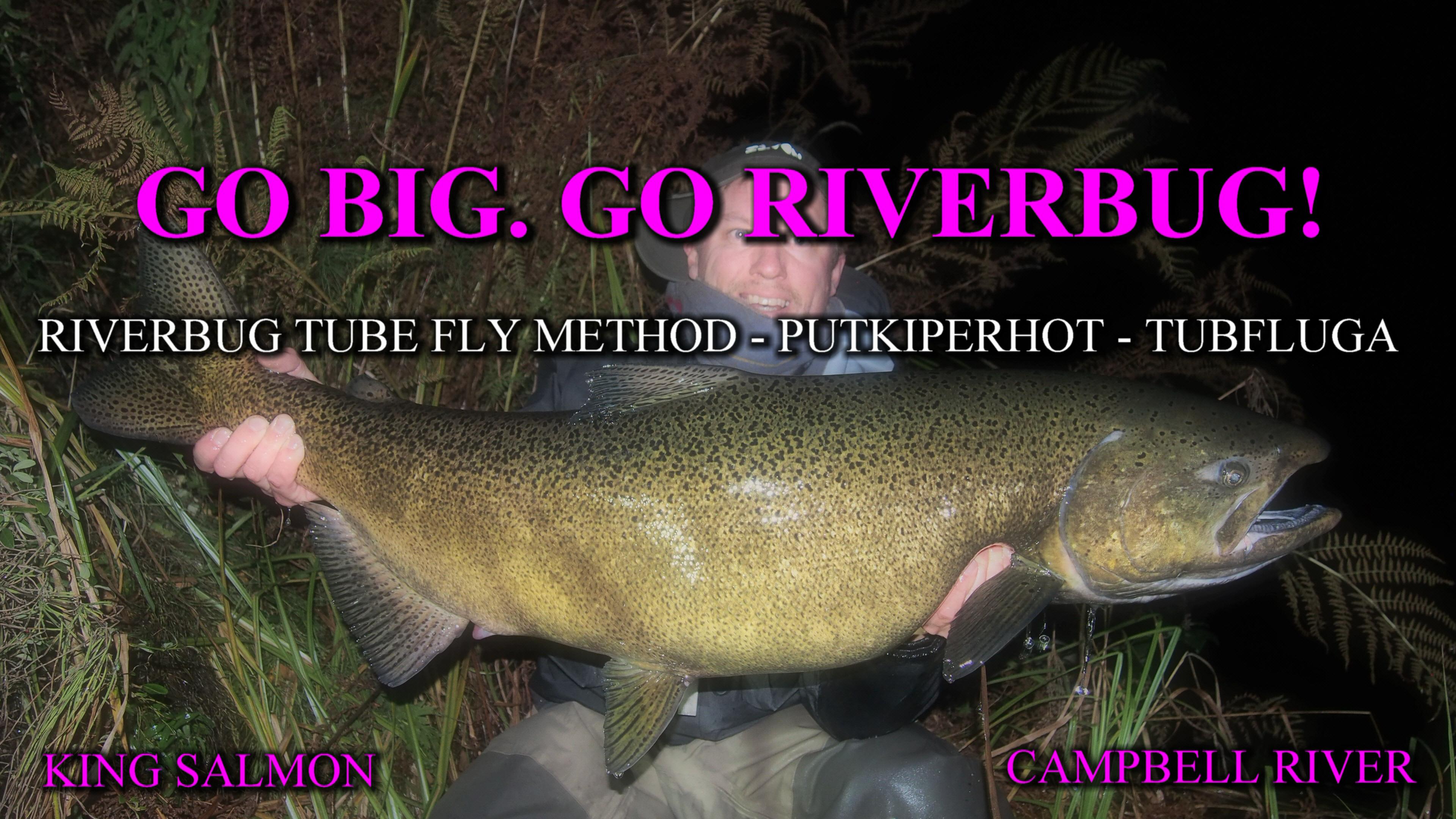 Massive King Salmon ( KUNINGASLOHI ) with RiverBug tube fly. #kingsalmon #kuningaslohi #lohi #canada #putkiperhot #streamer #kalastus #fishing #kala #perhokauppa #riverbug
