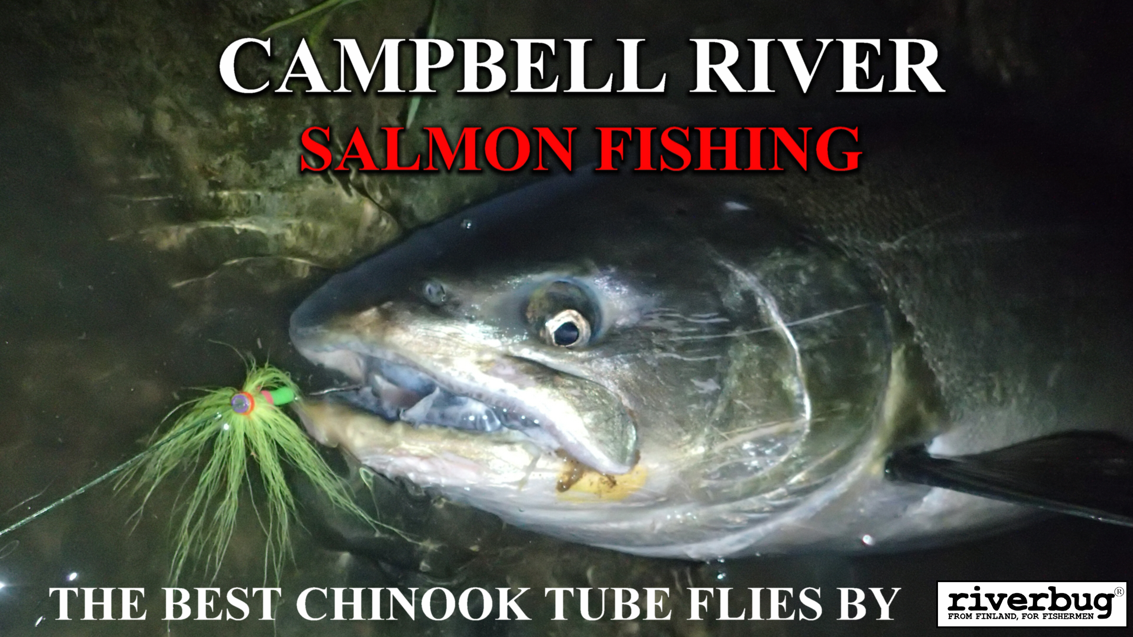 "CAMPBELL RIVER SALMON with RiverBug ""Tennari"" tube fly - Kuningaslohi RiverBugiin sidotulla Tennariperholla. #campbellriver #campbellriversalmon #tornionjoki #putkiperhot #matkakoski #tubfluga #tubeflue #lohiperhot #salmonfly #riverbug #tennari #tubenfliegen #salmon #lax #lohi #kungslax"